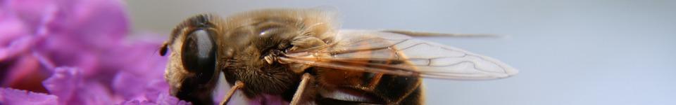 """<a class=&quot;amazingslider-posttitle-link&quot; href=&quot;http://sp2grodzisk.pl/zakonczenie-akcji-dwojka-adoptuje-pszczoly/&quot;>Zakończenie akcji """"Dwójka adoptuje pszczoły"""".</a>"""